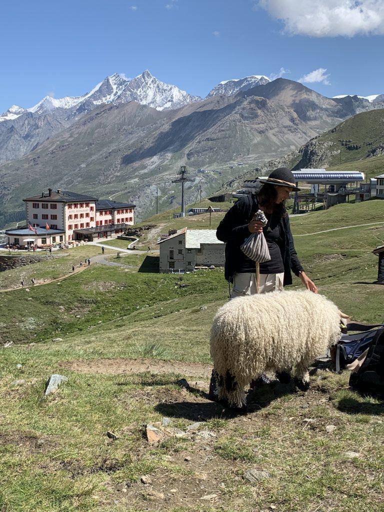 sheep zermatt logde destinations