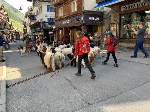 luxury chalets in Zermatt